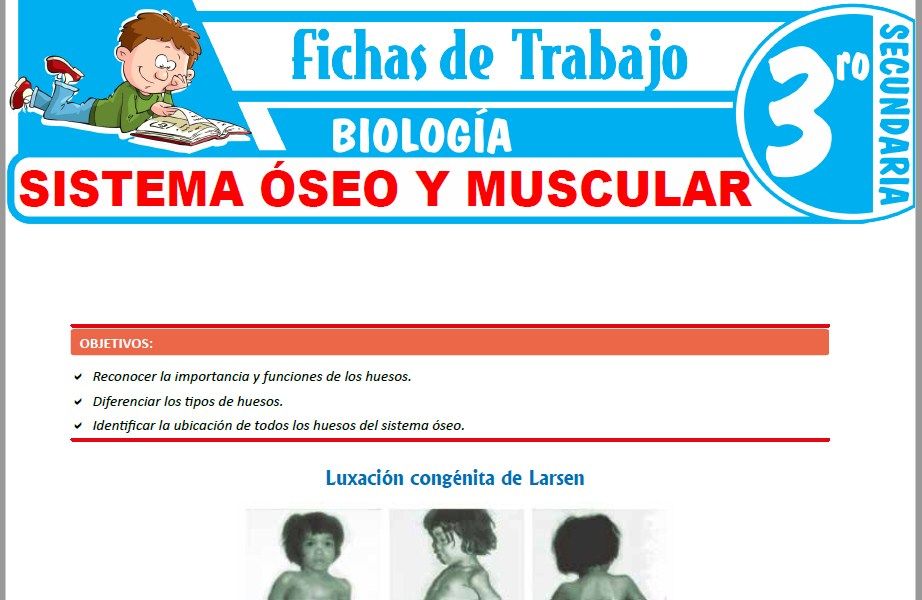 Modelos de la Ficha de Sistema óseo y muscular para Tercero de Secundaria