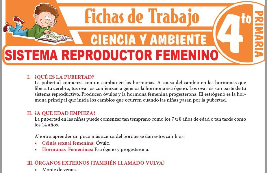 Modelos de la Ficha de Sistema reproductor femenino para Cuarto de Primaria