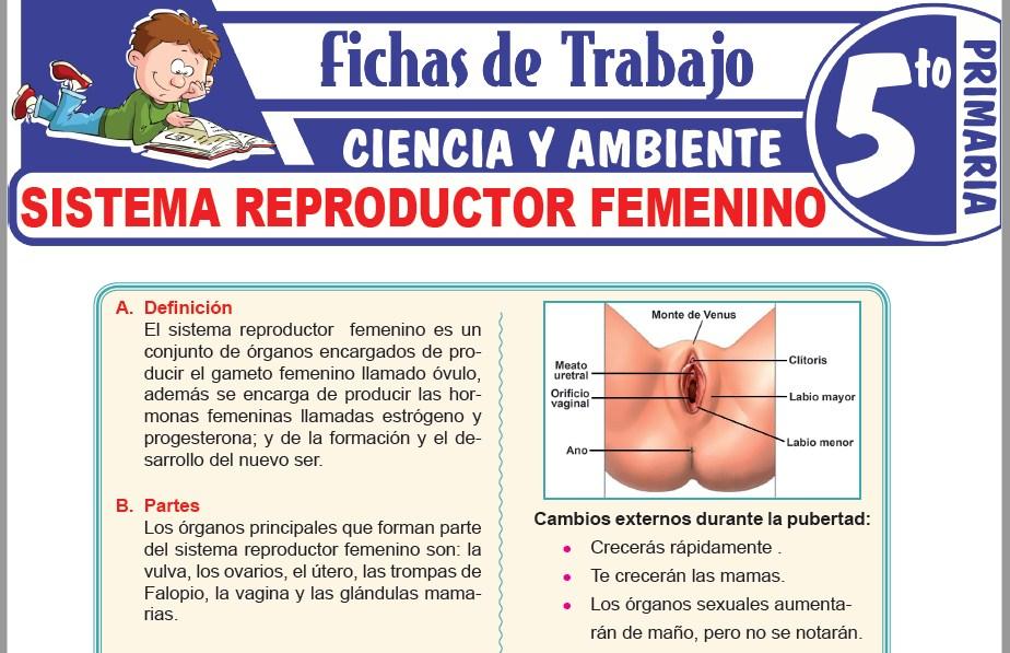 Modelos de la Ficha de Sistema reproductor femenino para Quinto de Primaria