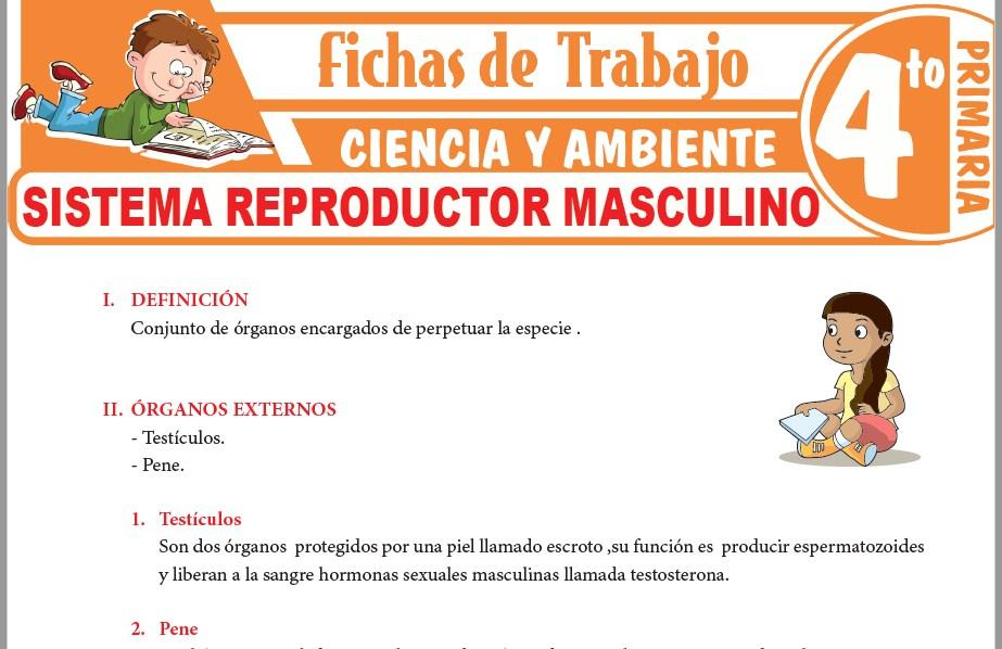 Modelos de la Ficha de Sistema reproductor masculino para Cuarto de Primaria