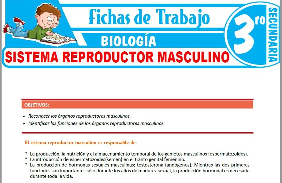 Modelos de la Ficha de Sistema reproductor masculino para Tercero de Secundaria