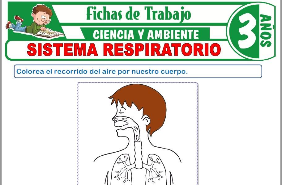 Modelos de la Ficha de Sistema respiratorio para Niños de Tres Años