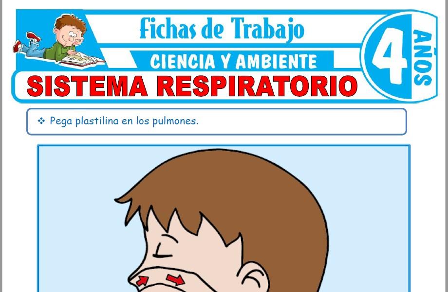 Modelos de la Ficha de Sistema respiratorio para Niños de Cuatro Años
