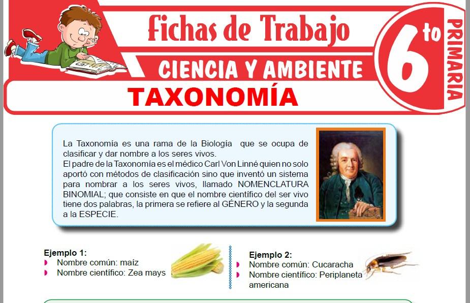 Modelos de la Ficha de Taxonomía para Sexto de Primaria